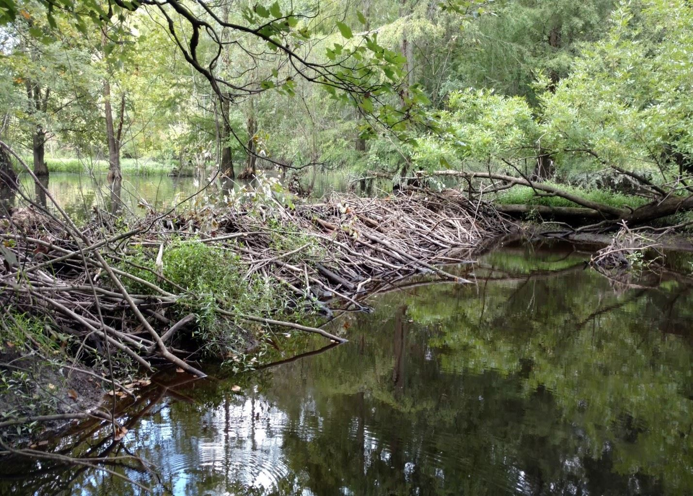 core creek beaver dam
